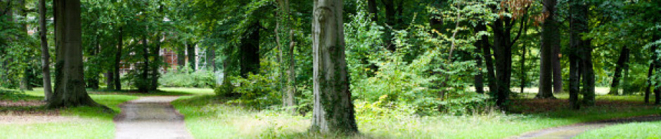 cropped-path-11.jpg